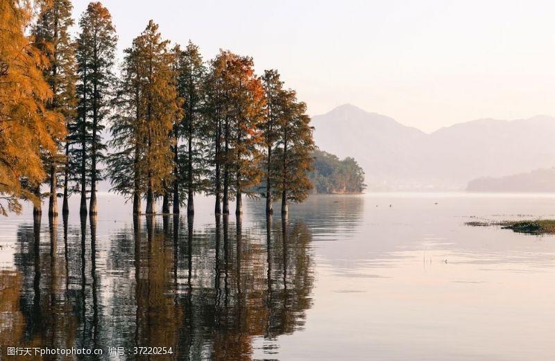 水面背景水中森林