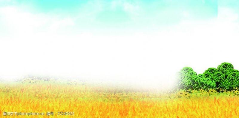 蓝天展板小麦背景