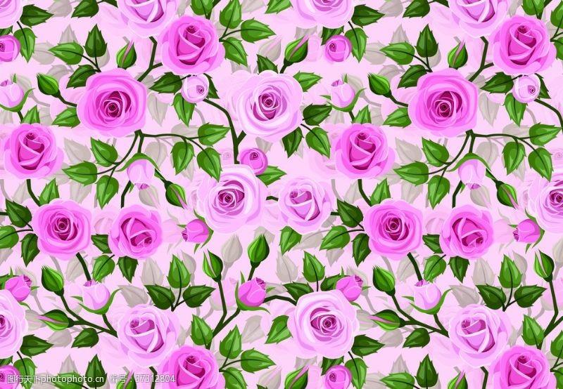 玫瑰花背景玫瑰花