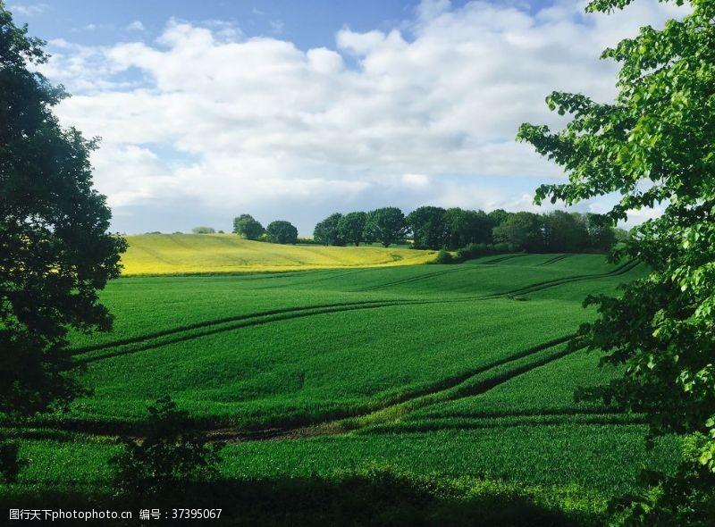 草坪草地蓝天