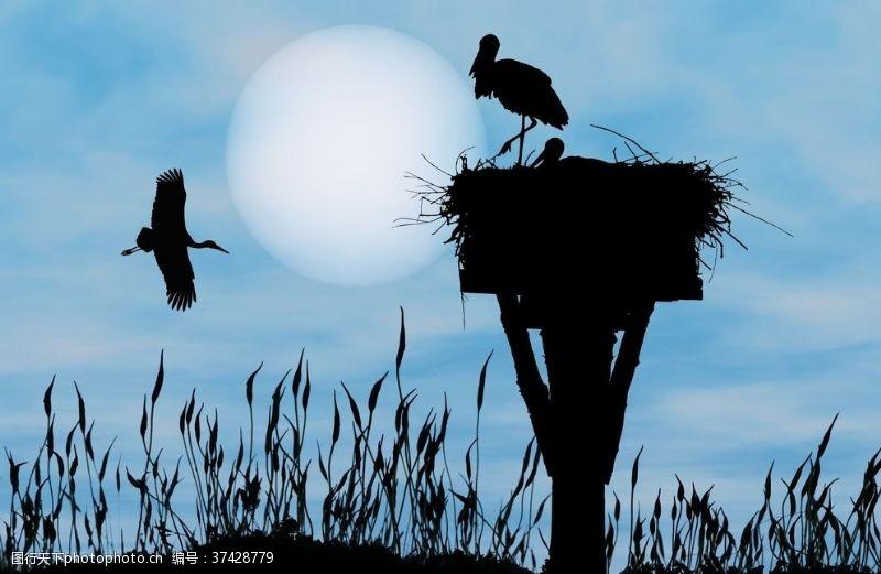 鸟巢天空飞鸟