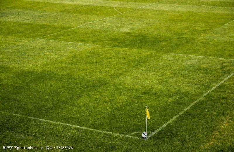 世界杯足球场足球场绿荫