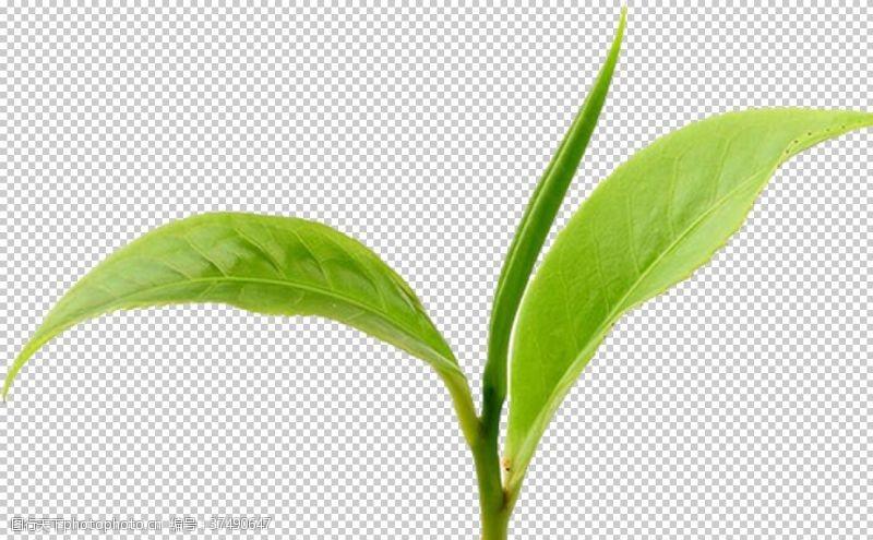 茶设计茶叶