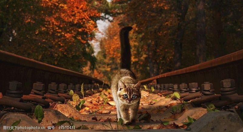 宠物动物合集墨镜猫咪壁纸
