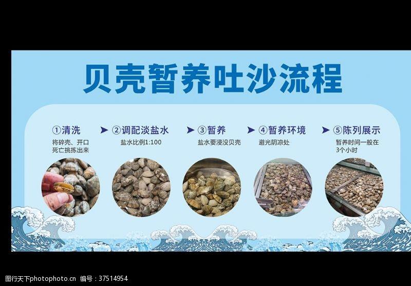 免费素材花蛤