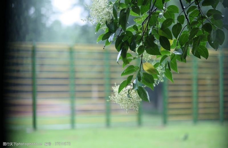 草坪雨后树叶