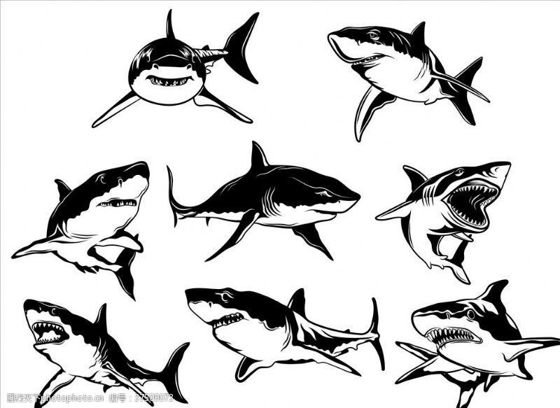 海洋风鲨鱼