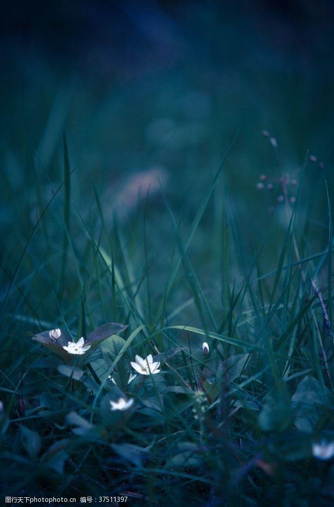 植物草坪小花夜晚背景素材
