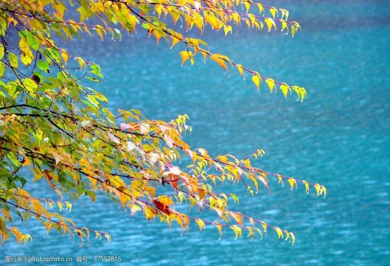 多彩的树木风中的树叶