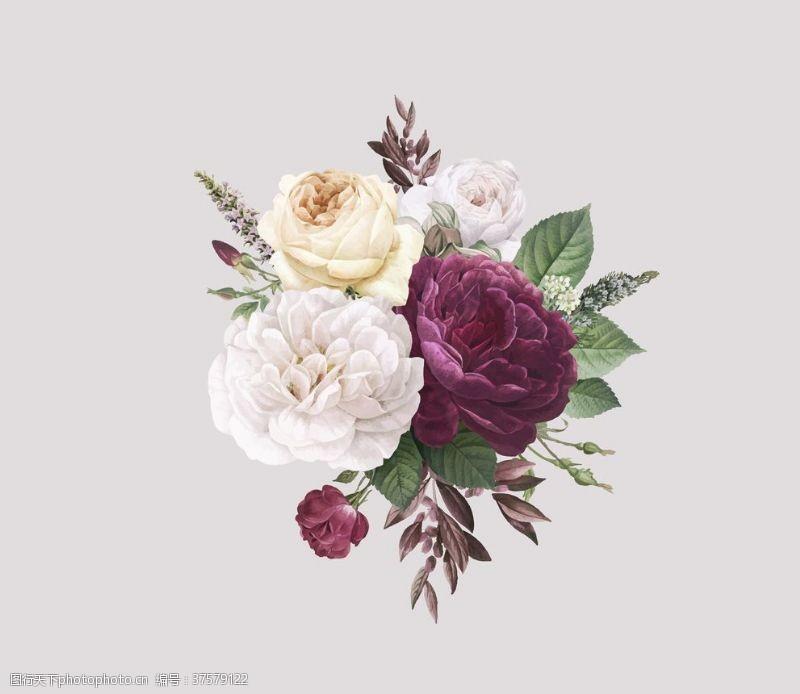 妩媚浪漫艺术花朵特写大图纯背景