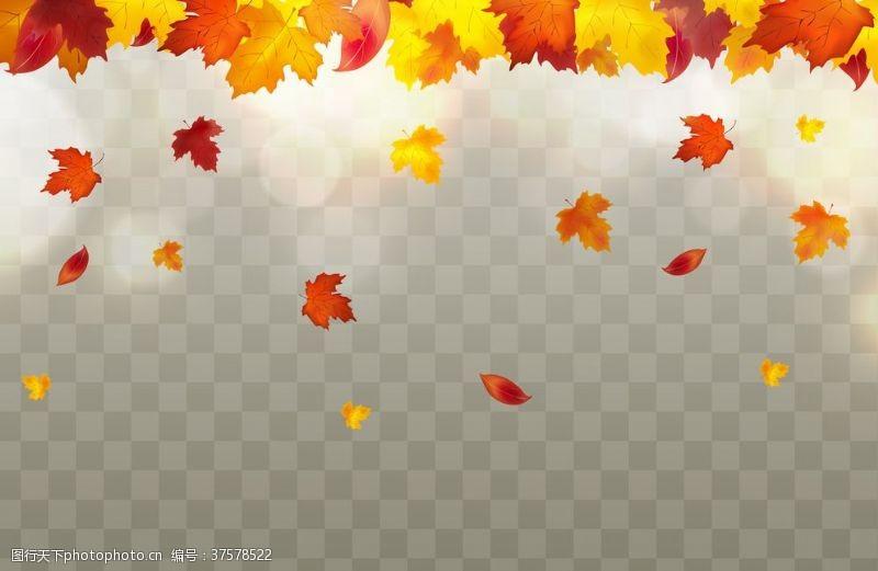 落叶背景秋天落叶