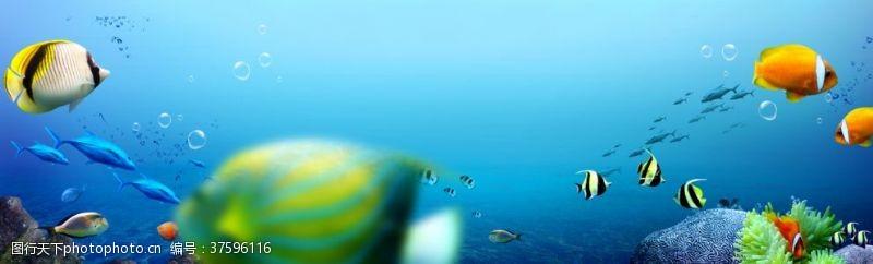 海底珊瑚唯美海底世界