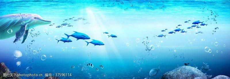 海底珊瑚海豚