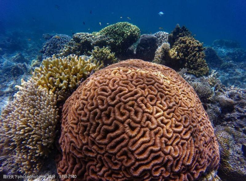 海底珊瑚手抄报