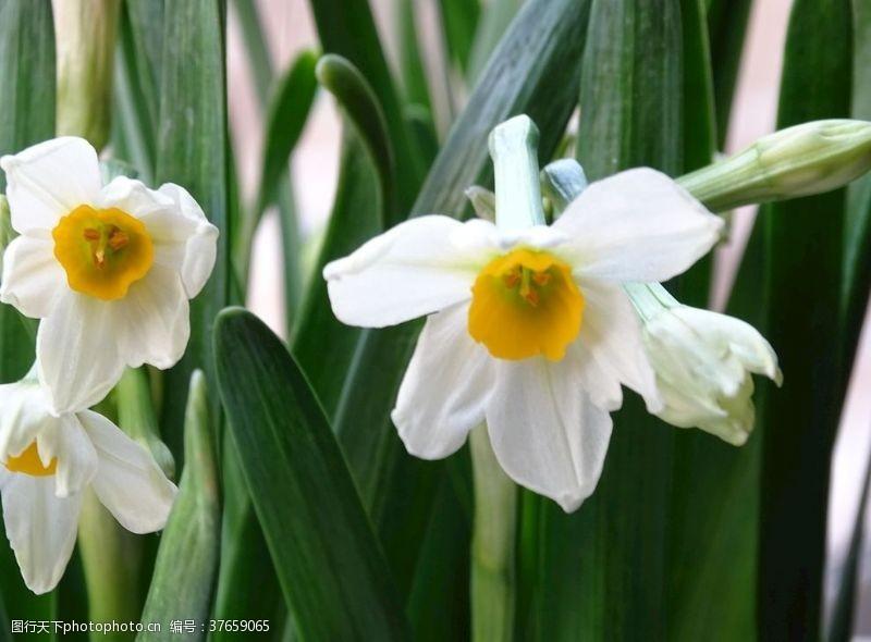 其他模板小白花