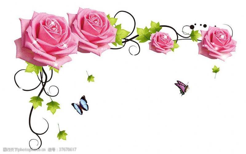 梦幻花玫瑰
