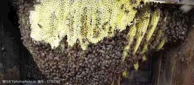 摄影图库蜂蜜