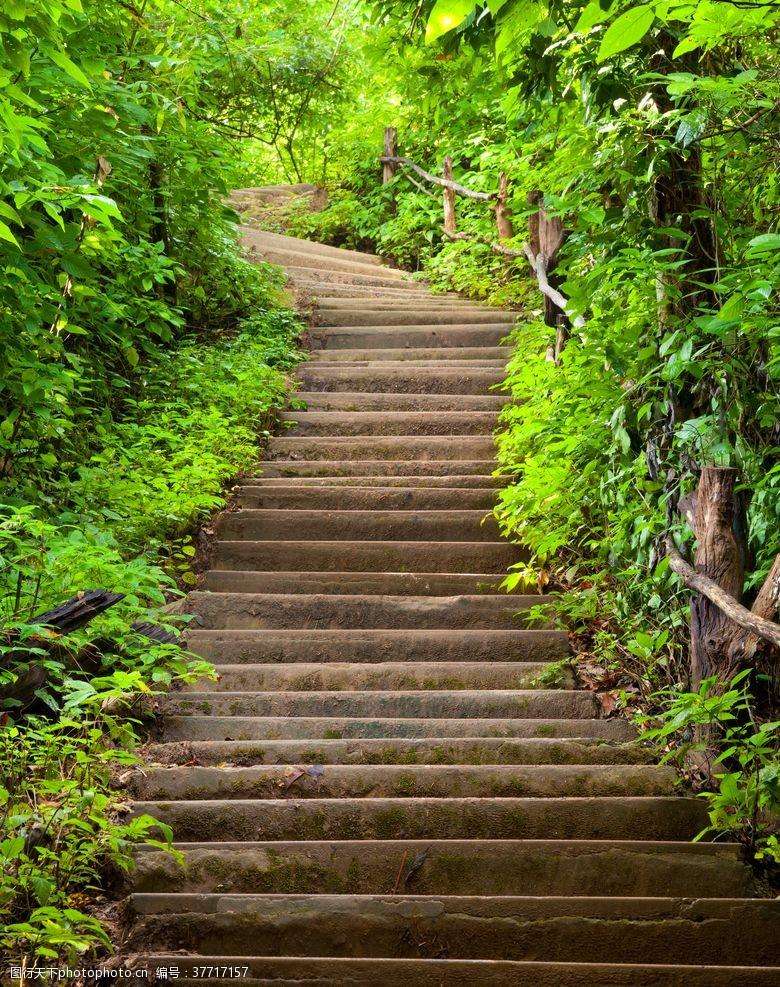 林荫小路石梯