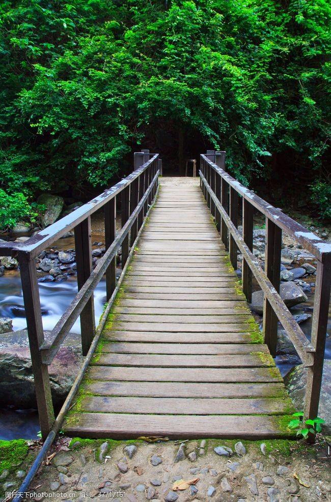 林荫小路小桥