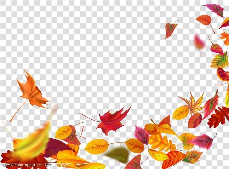 落叶背景树叶背景