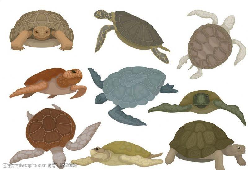 果汁素材海龟
