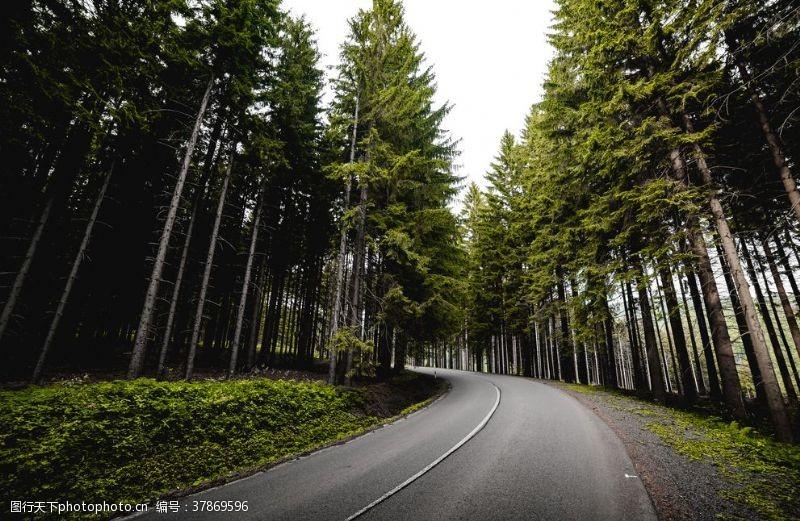国外旅游森林