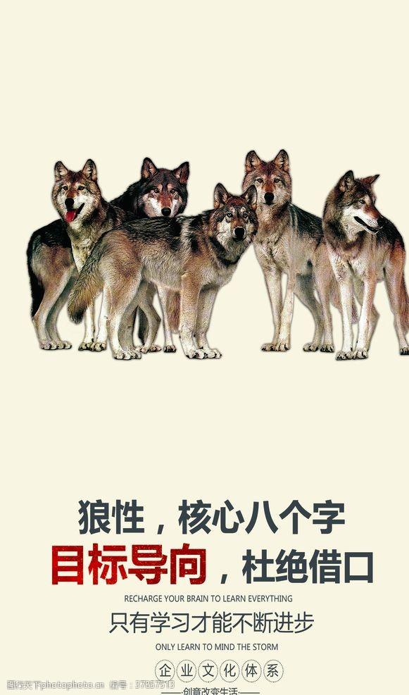 狼性企业文化墙贴标语海报素材