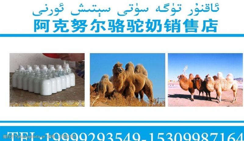 名片卡片骆驼奶销售店