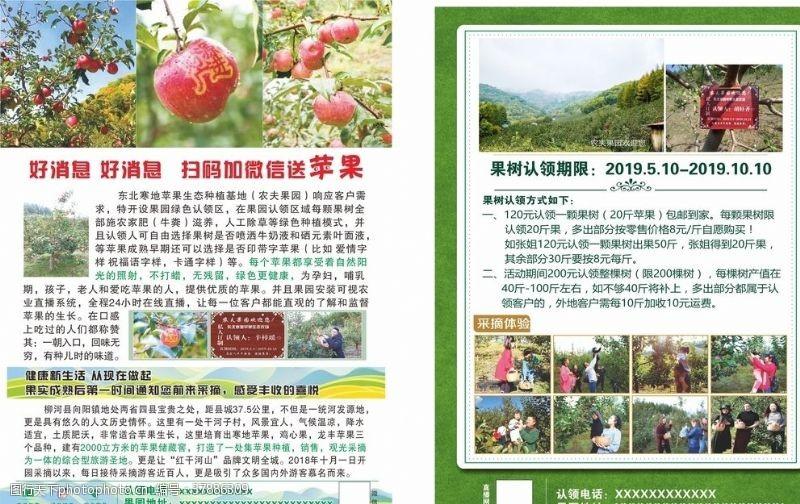 彩页苹果DM水果单页宣传单