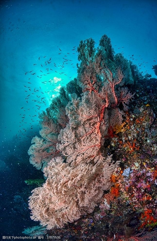 海底珊瑚珊瑚礁