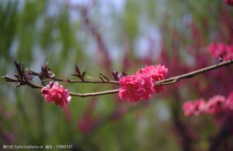 春天花朵花