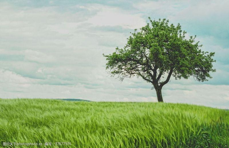 蓝天白云一棵树唯美