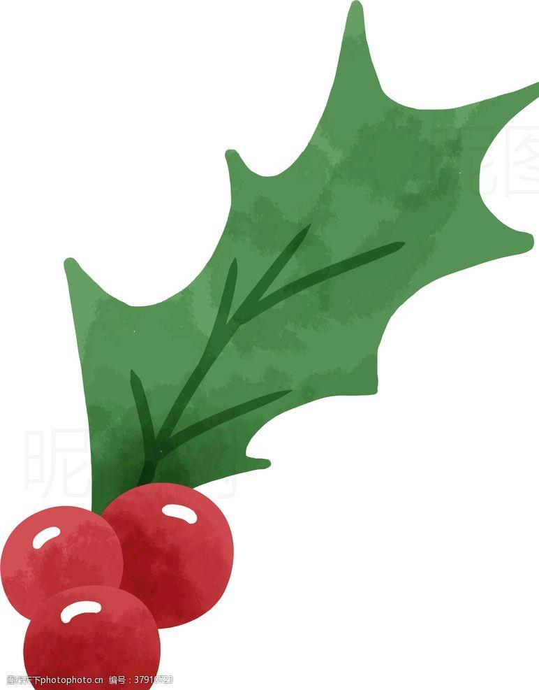 腊梅圣诞果