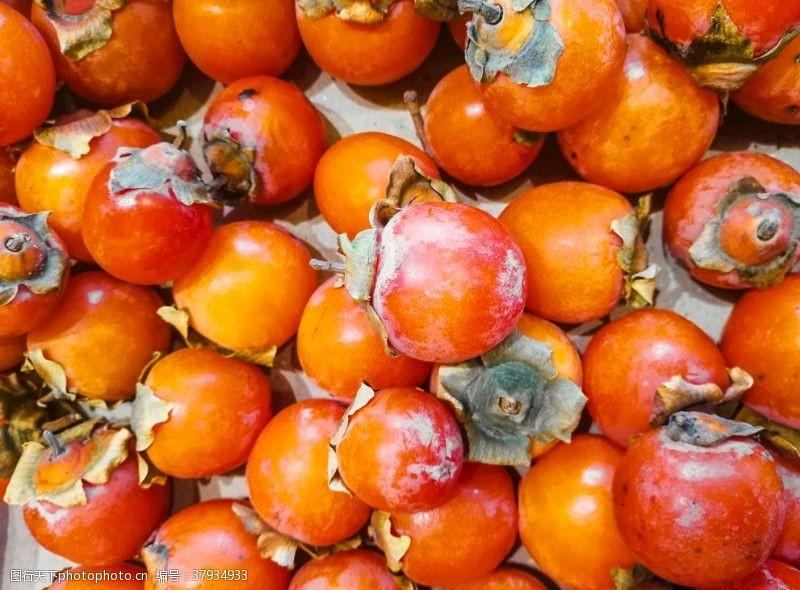 生物世界柿子