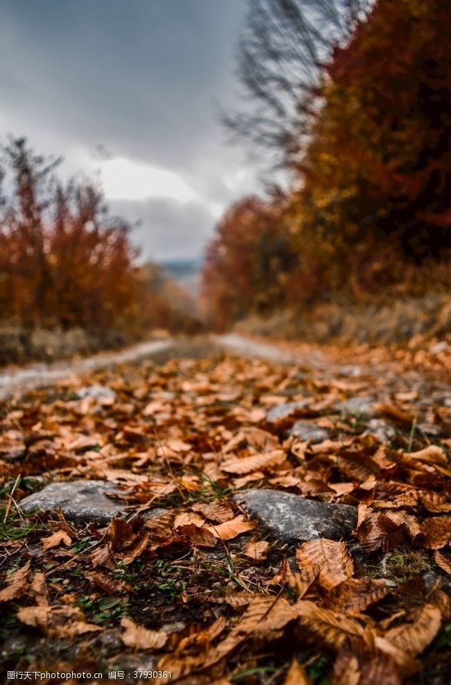 自然落叶枫叶枯叶小径
