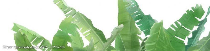绿色树叶植物清新传统插画背景
