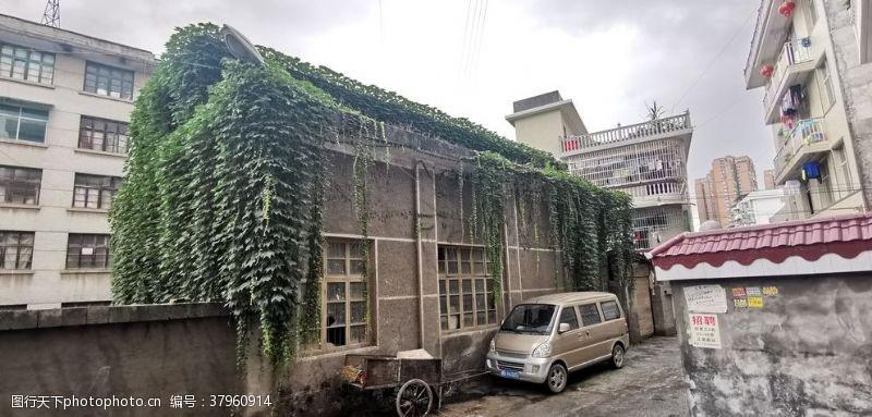 绿植爬山虎的房子