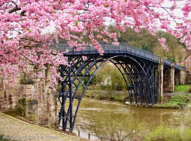 樱花小桥湖面清新背景素材