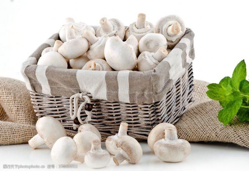 野菌菇蘑菇