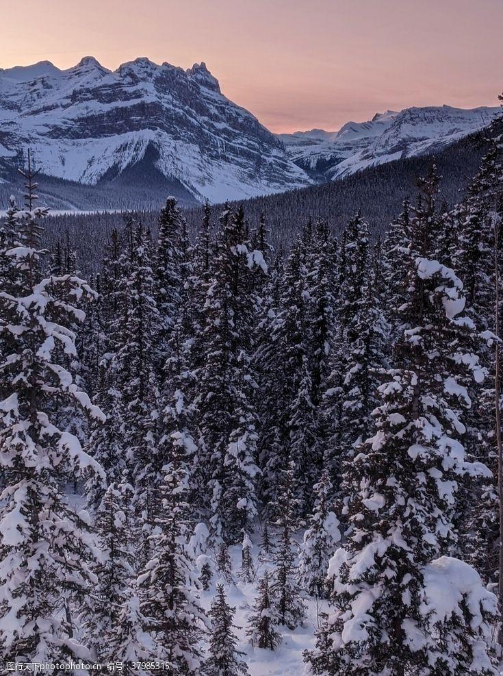登山运动雪山树林