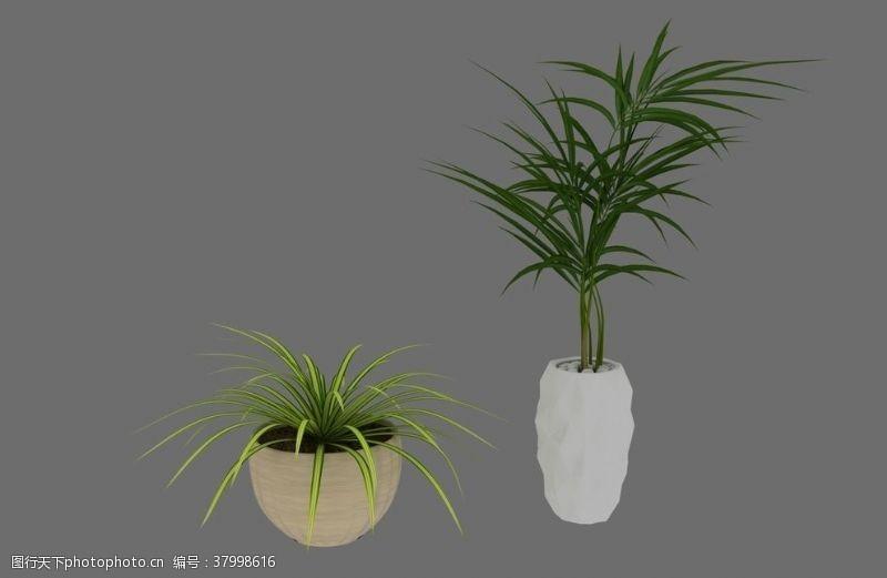 3d作品植物盆栽3d模型