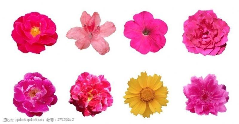 春天花朵花朵