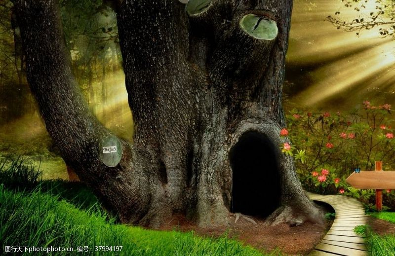 海报设计梦幻森林