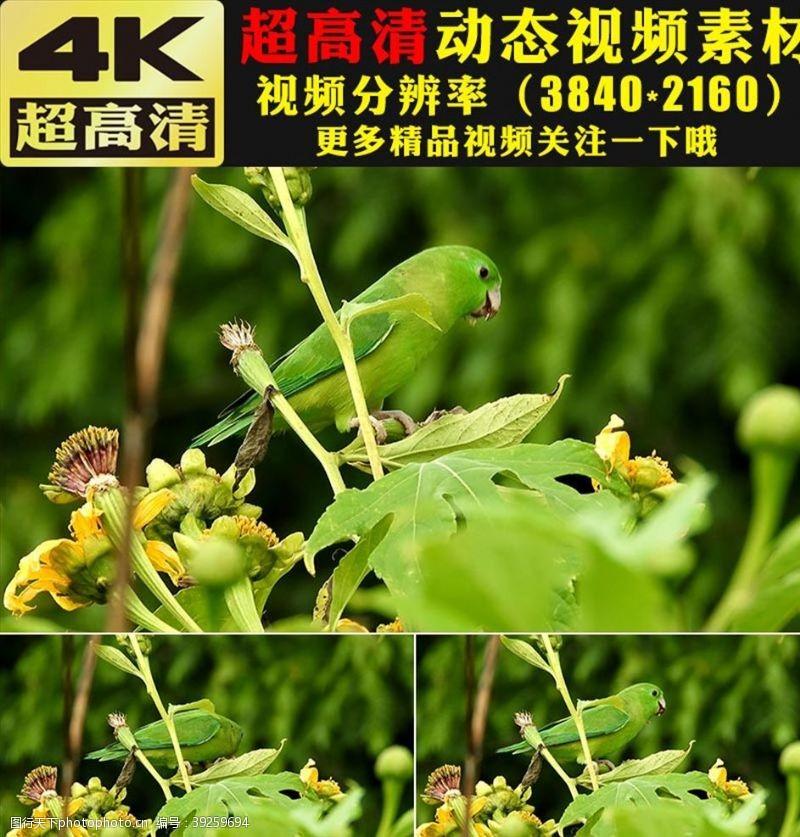 环保广告绿叶植物小鸟空镜头实拍视频素材