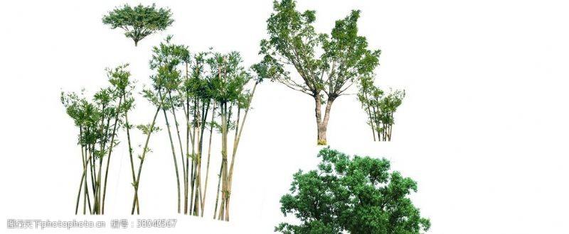 素材中景树木