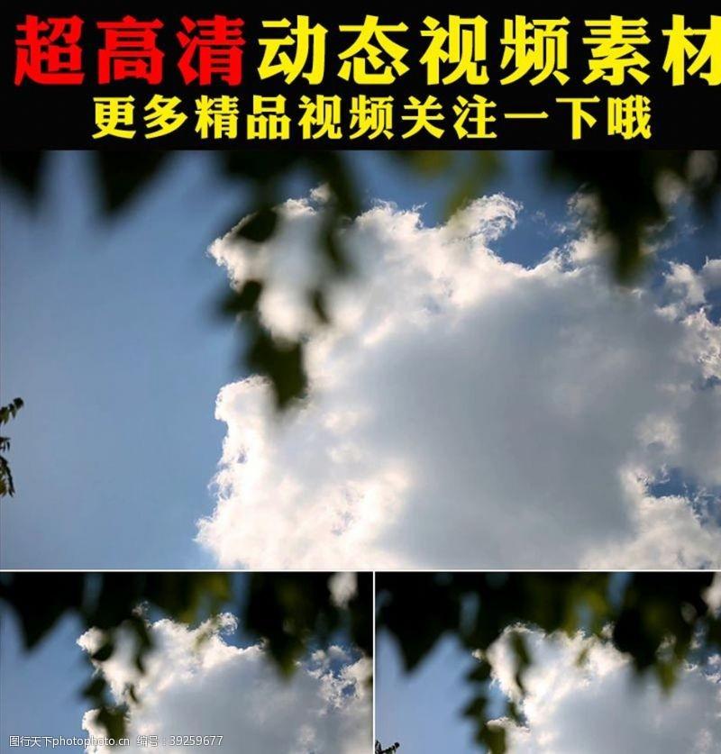 影视素材蓝天白云植物树叶空镜头视频素材