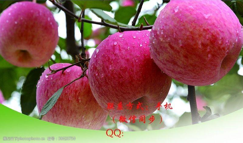 dm宣传单苹果
