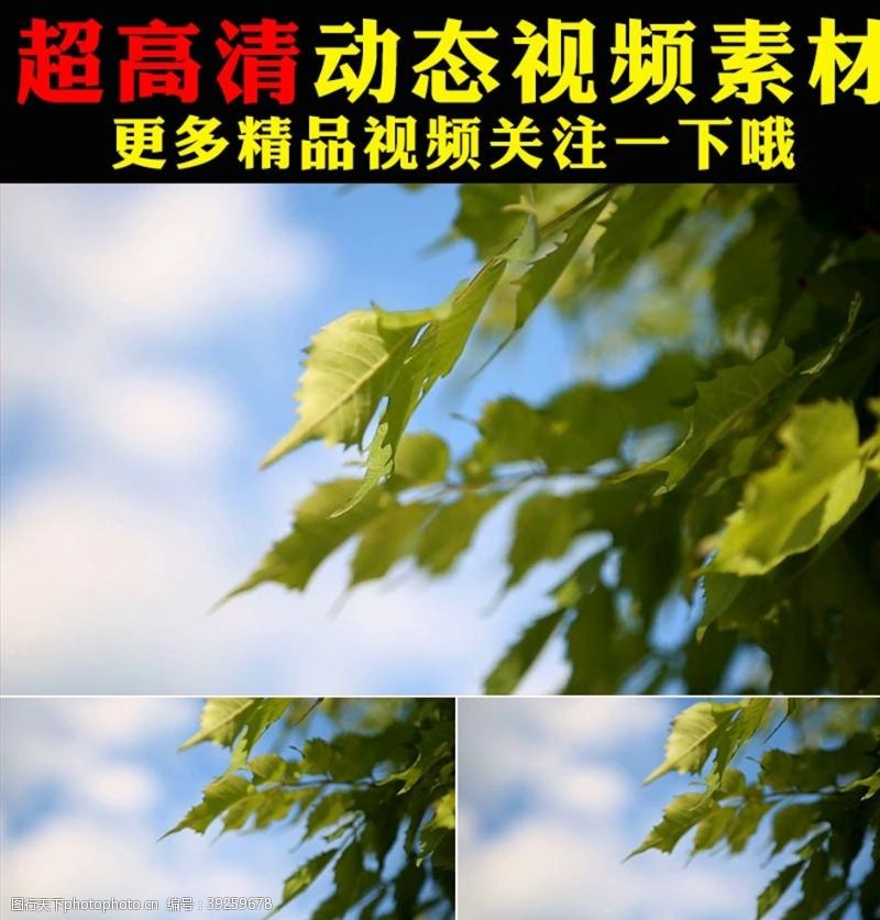 影视素材清新绿叶阳光森林树叶实拍视频
