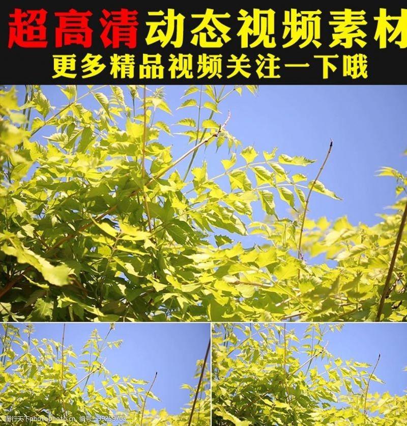 环保广告野草青草叶子实拍视频素材