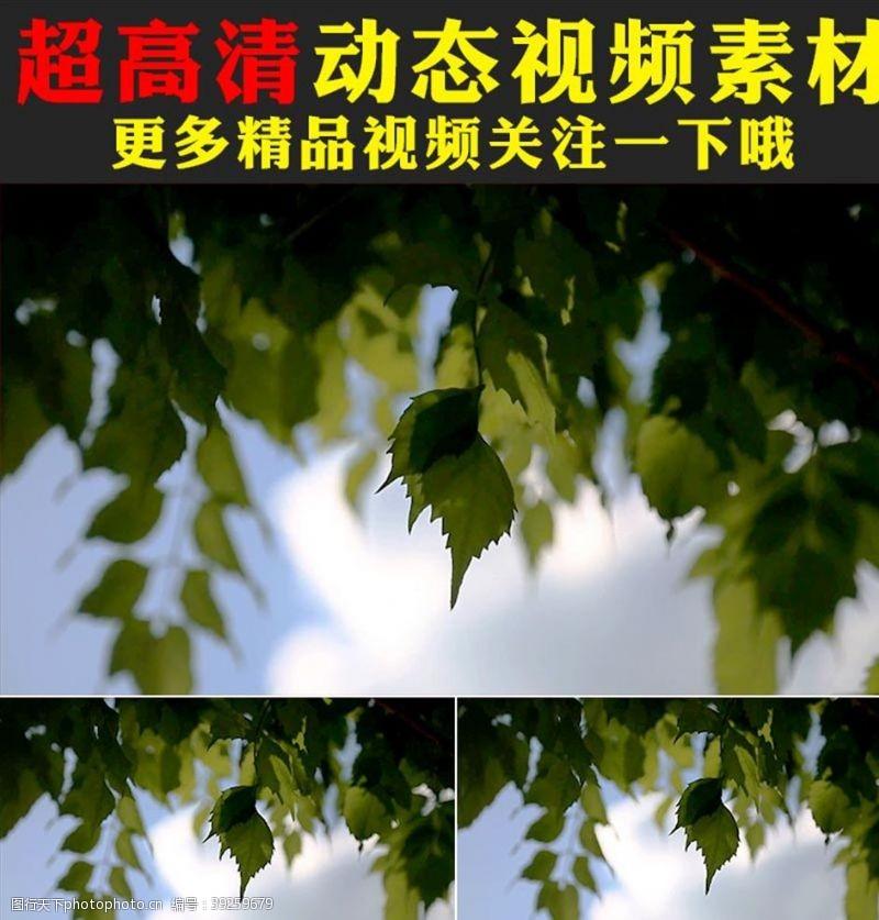 影视素材蓝天白云植物树树叶视频素材